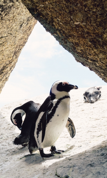 Cape Point experience and meet the Penguins