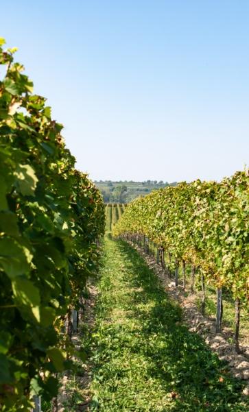 Wine tasting at an organic vineyard